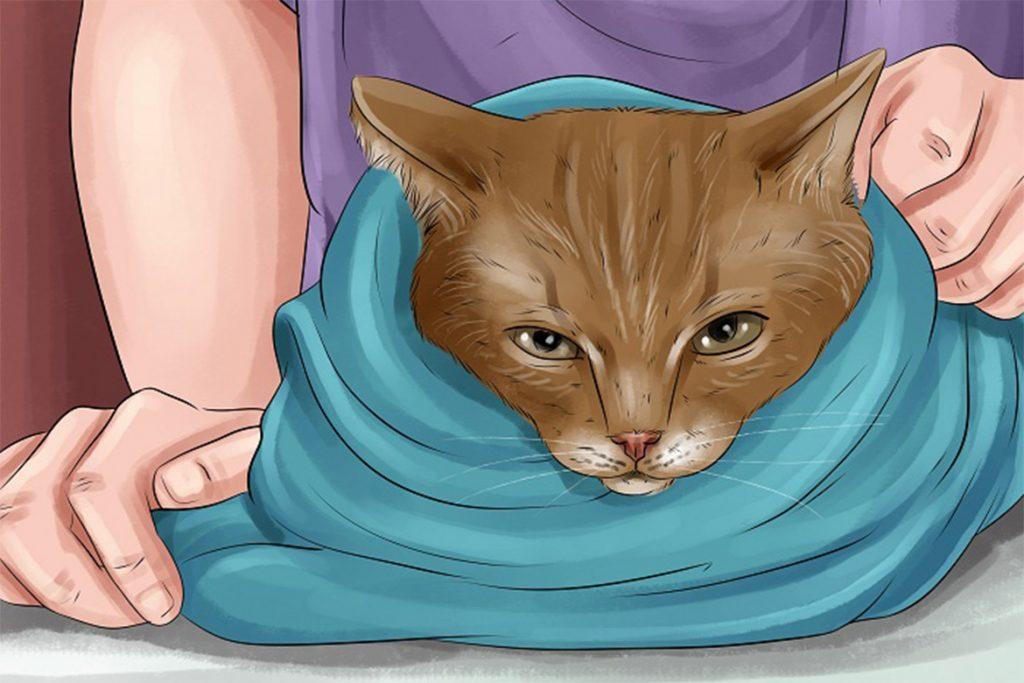 Что делать, если кота укусил Иксодовый клещ – как выглядит укус, первые симптомы, чем опасен и как помочь любимцу фиксация