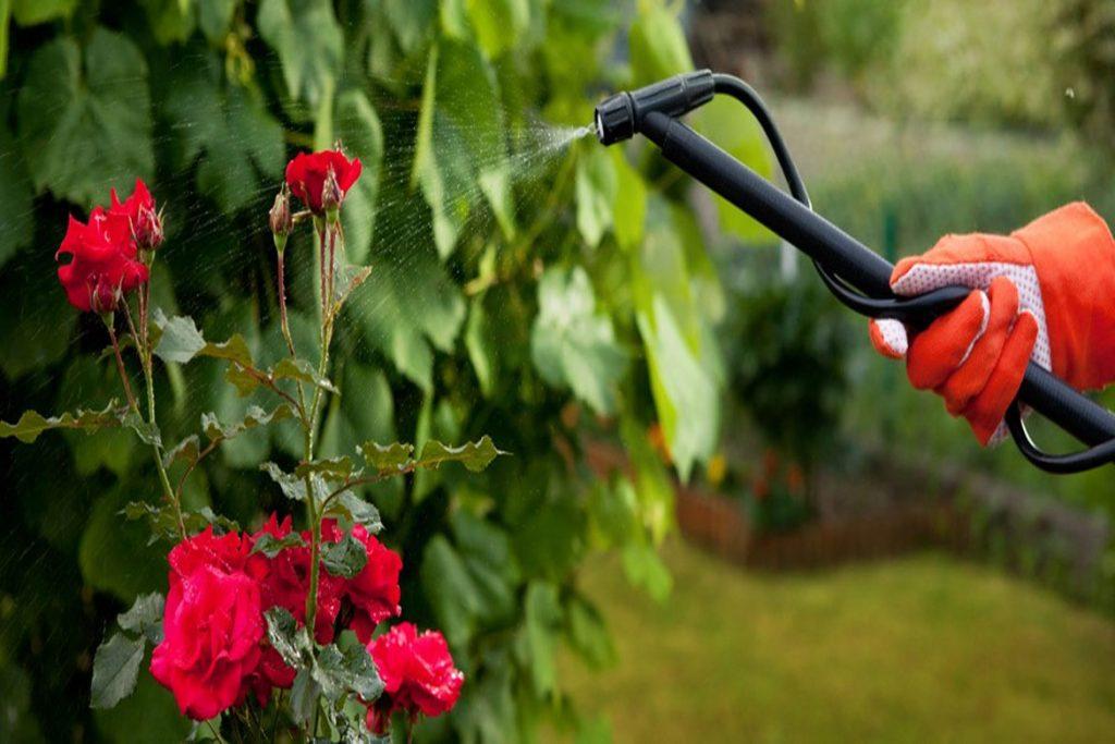 Как эффективно бороться с паутинным клещом на розах в домашних условиях - профилактика