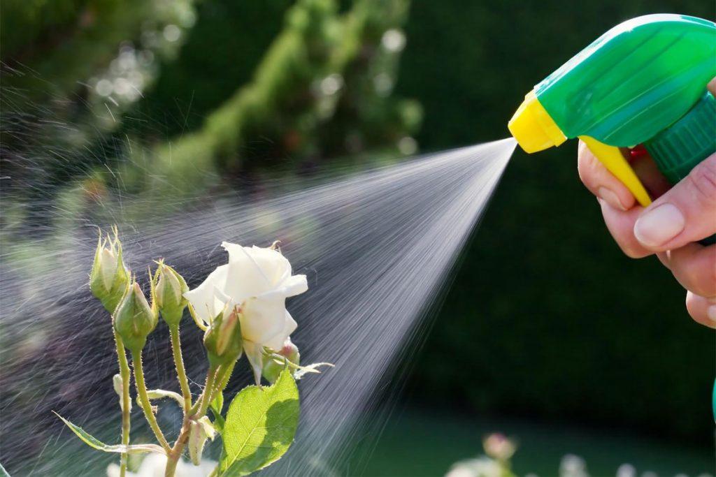 Как эффективно бороться с паутинным клещом на розах в домашних условиях - обработка