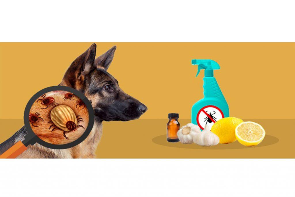 Клещи у собаки: виды, симптомы, как выглядят как избавиться от заболеваний в домашних условиях