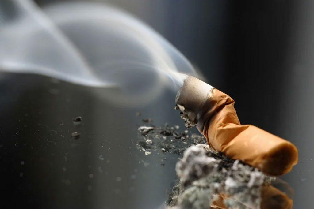 Паутинный клещ на комнатном лимоне - табачный дым
