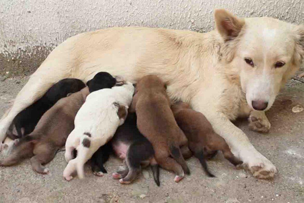 Подкожный клещ у собаки причины