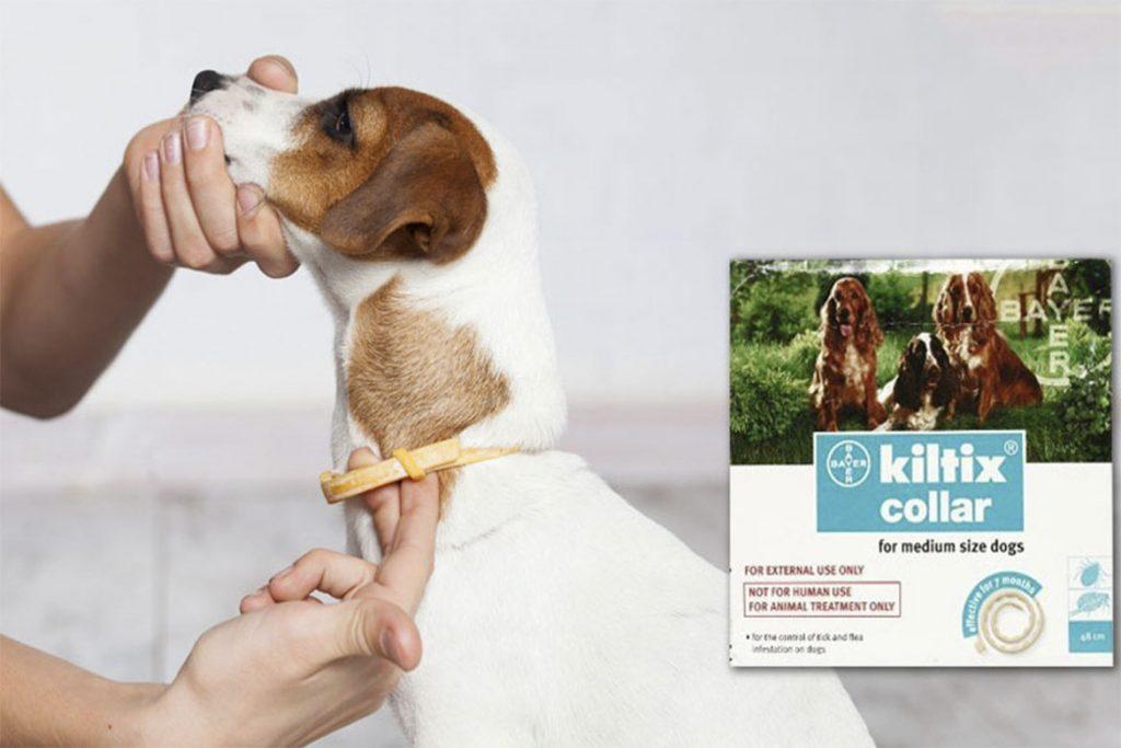 Подкожный клещ у собаки как предотвратить