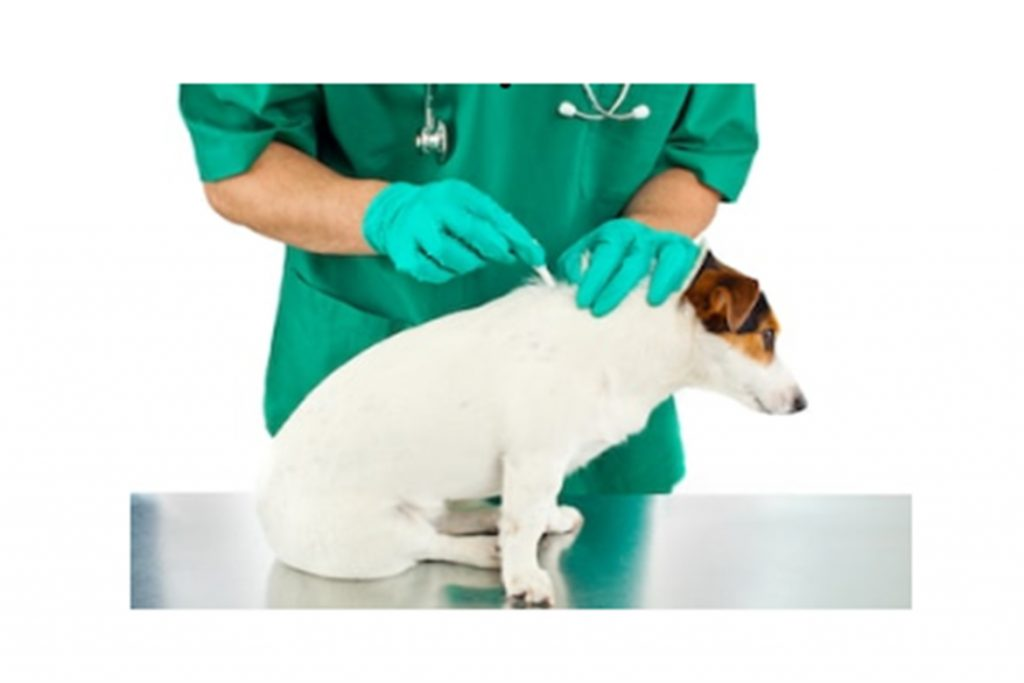 Практик капли для собак от клещей и блох – инструкция по применению, отзывы заводчиков и ветеринаров, дозировка