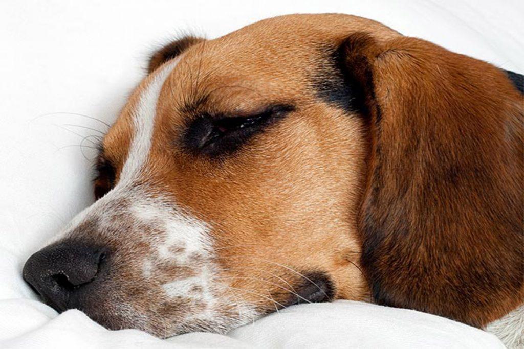 Прививка от клещей для собак: как и когда ее делают – отзывы ветеринаров, побочные действия