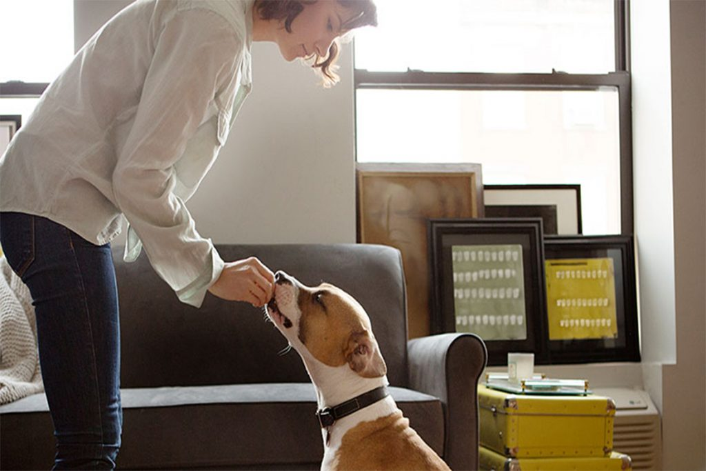 Симпарика (Simparica) для собак и щенков – инструкция по применению жевательных таблеток от блох и клещей, дозировка