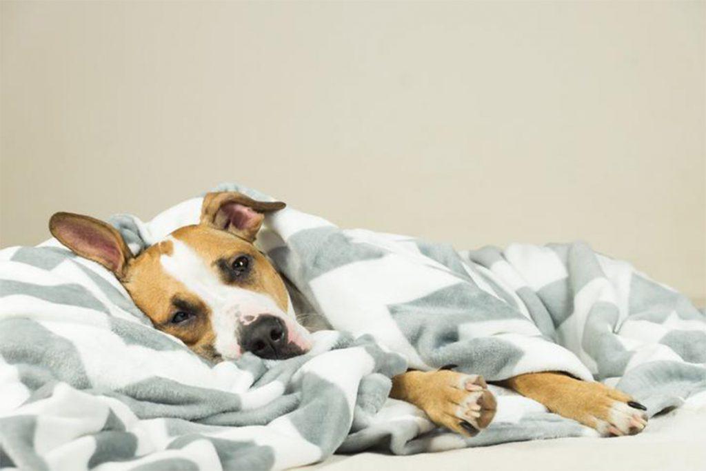 Собаку укусил клещ, вопросы ветеринару