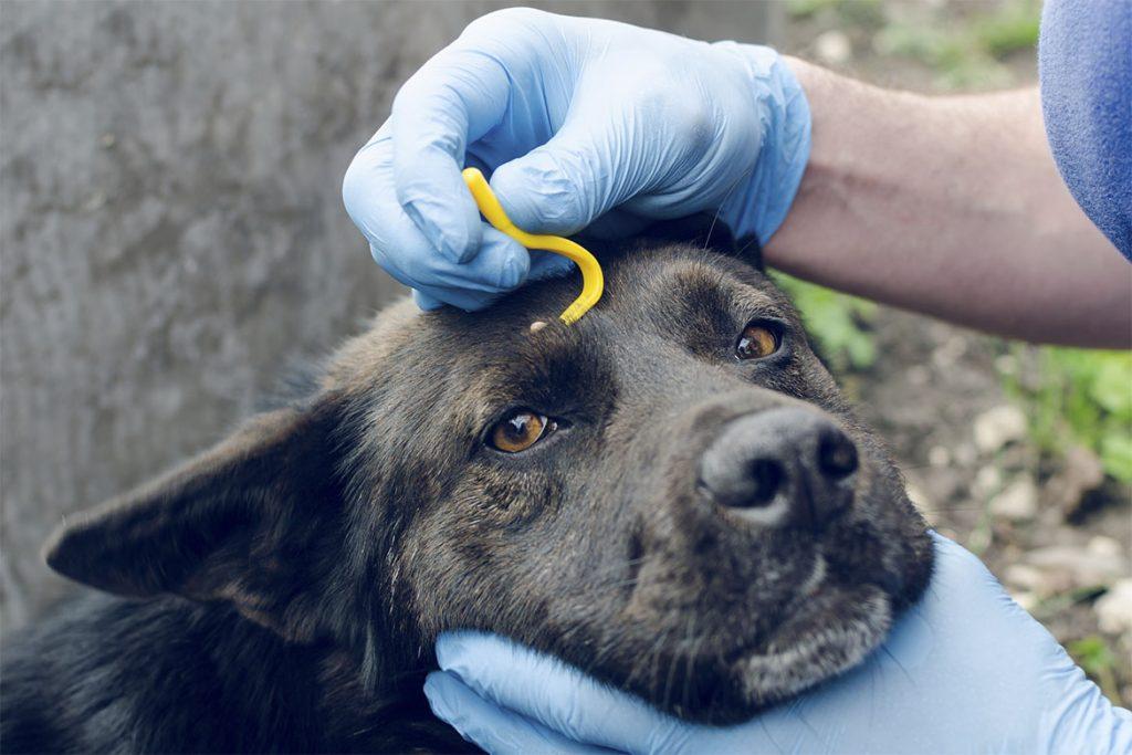 Собаку укусил клещ, профилактика укусов