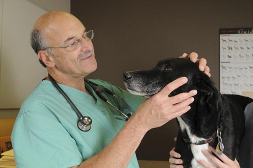 Собаку укусил клещ, отзывы ветеринаров