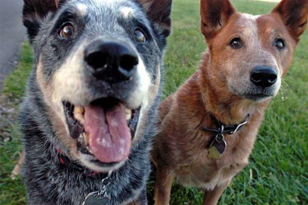 Ушной клещ (Отодектоз) у собак – как выглядит, симптомы, чем опасен и как от него избавиться раз и навсегда, пути заражения