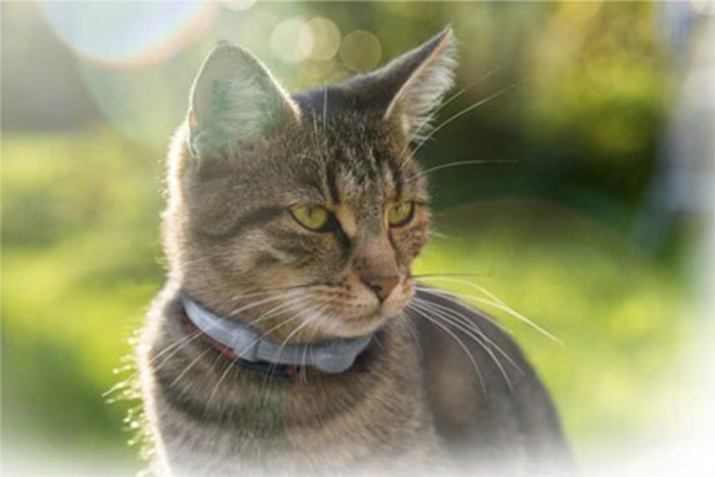 Виды клещей у кошки – как выглядят, откуда берутся, чем опасны профилактика