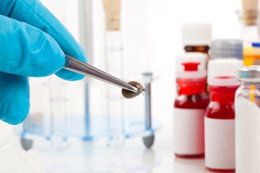 16 самых лучших антибиотиков и противовирусных средств, применяемых при укусе клеща – схема лечения, профилактика опасных заболеваний, отзывы