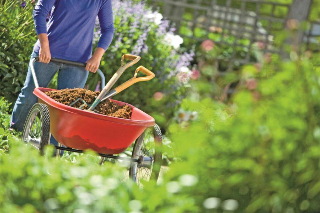 Эффективные меры борьбы с паутинным клещом на баклажанах в теплице - отзывы огородников и агрономов, откуда появляется