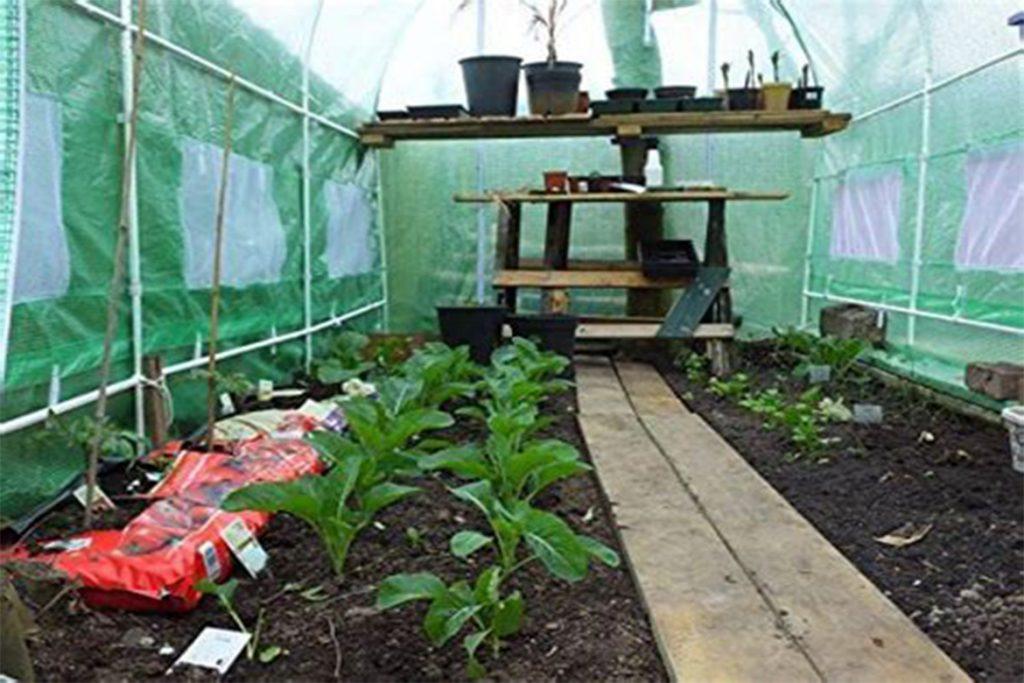 Эффективные меры борьбы с паутинным клещом на баклажанах в теплице - отзывы огородников и агрономов, условия для обитания
