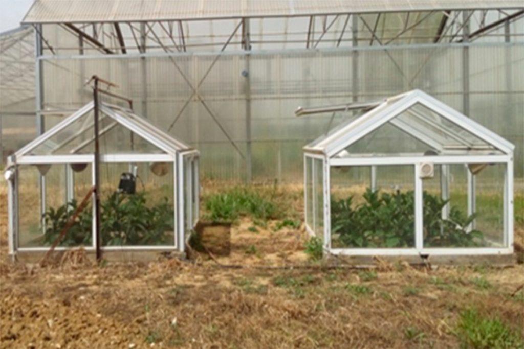 Эффективные меры борьбы с паутинным клещом на баклажанах в теплице - отзывы огородников и агрономов, профилактика