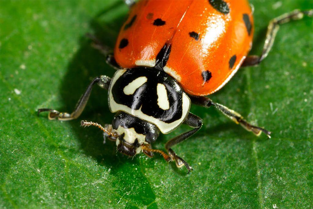Как бороться с паутинным клещом на смородине – обработка, препараты, народные средства, отзывы садоводов и агрономов, биологический враги