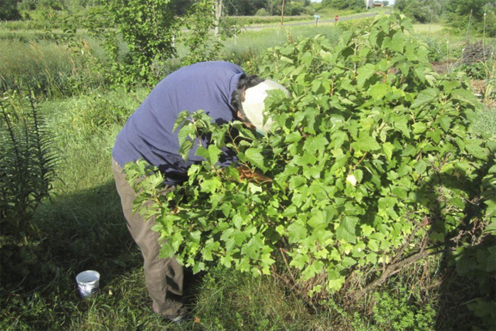 Как бороться с паутинным клещом на смородине – обработка, препараты, народные средства, отзывы садоводов и агрономов, рекомендации по уходу