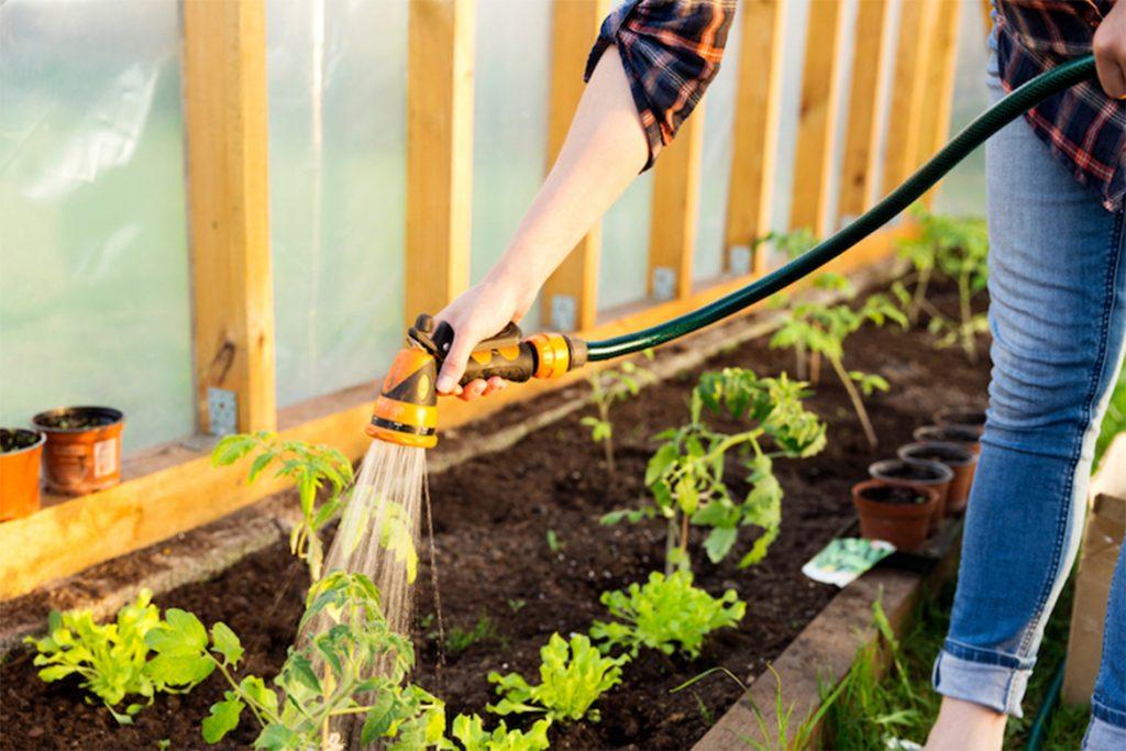 Клещи в теплице – что делать, если паутинный клещ завёлся в теплице – как спасти растения, как избавиться от паразита, обработка весной