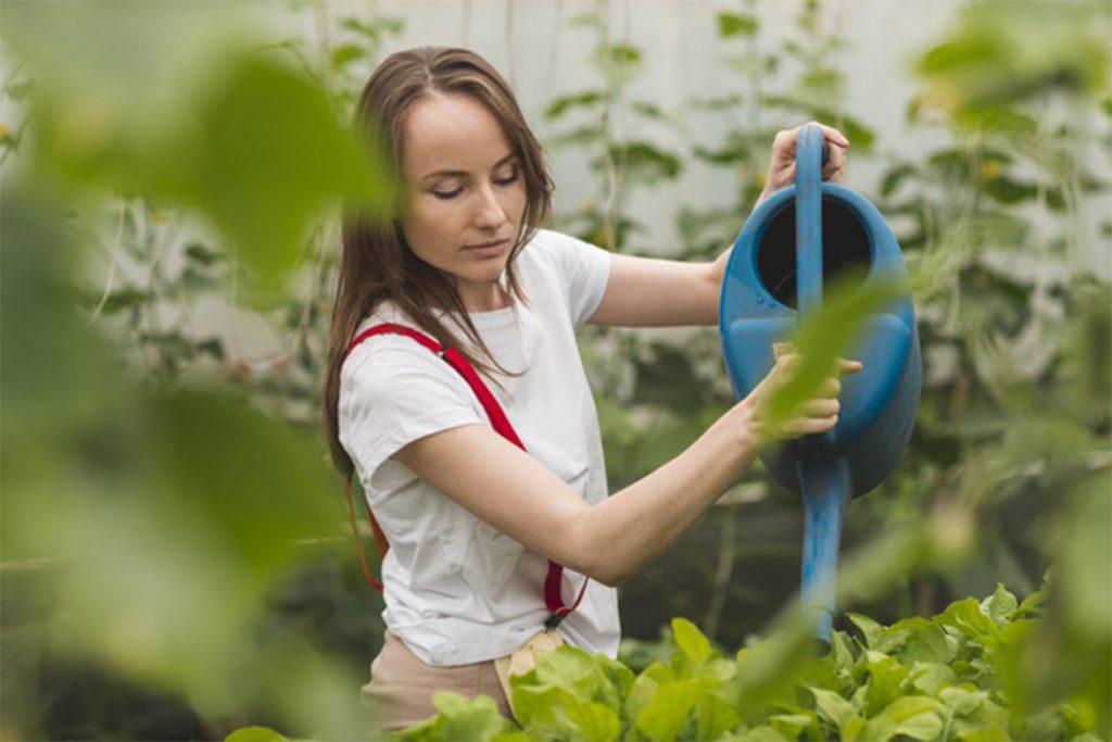 Клещи в теплице – что делать, если паутинный клещ завёлся в теплице – как спасти растения, как избавиться от паразита, отзывы садоводов