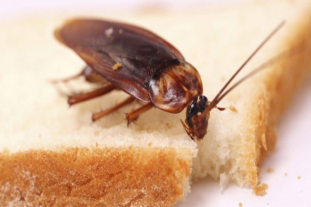 10 способов, как избавиться от домашних тараканов в квартире раз и навсегда в домашних условиях, что едят вредители