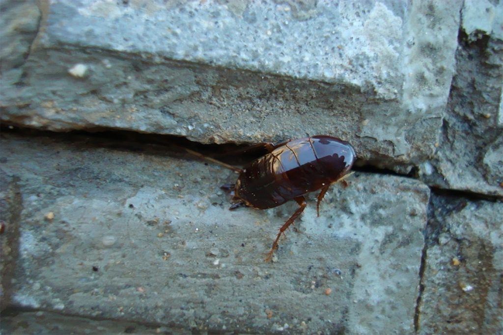 10 способов, как избавиться от домашних тараканов в квартире раз и навсегда в домашних условиях, где и как прячутся