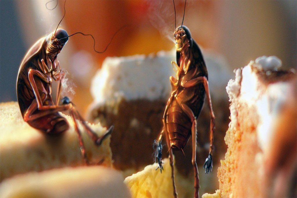 10 способов, как избавиться от домашних тараканов в квартире раз и навсегда в домашних условиях, плюсы и минусы химических препаратов
