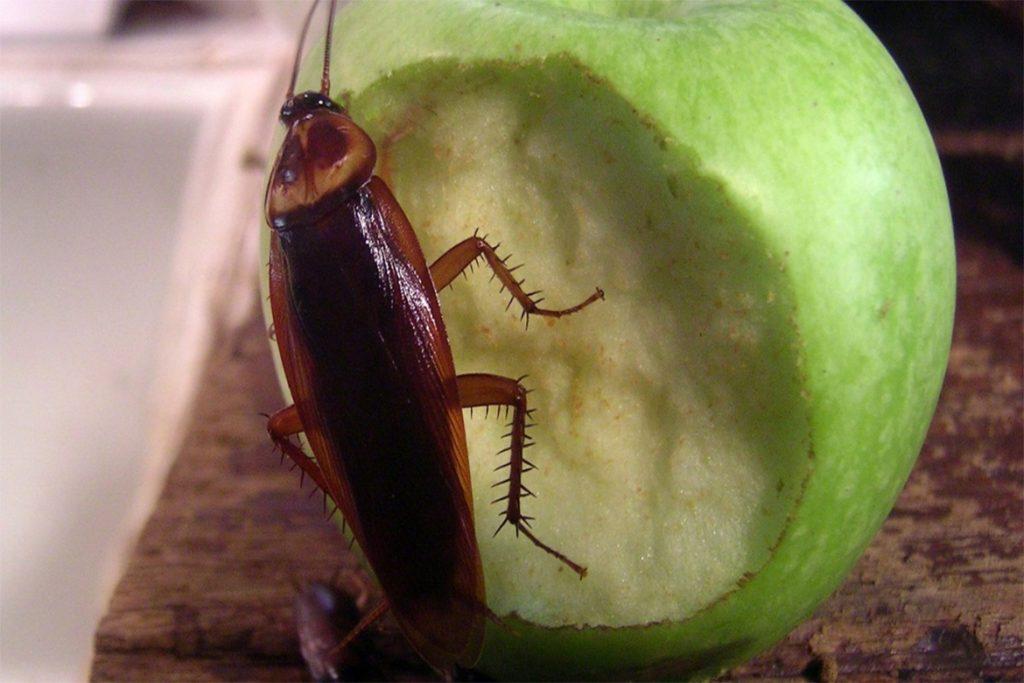10 способов, как избавиться от домашних тараканов в квартире раз и навсегда в домашних условиях, причины появления