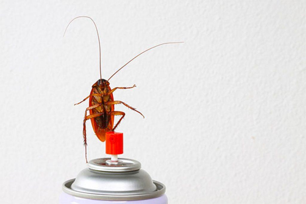 10 видов самой эффективной обработки (травли) тараканов в помещениях, как обработать чтобы избавиться раз и навсегда
