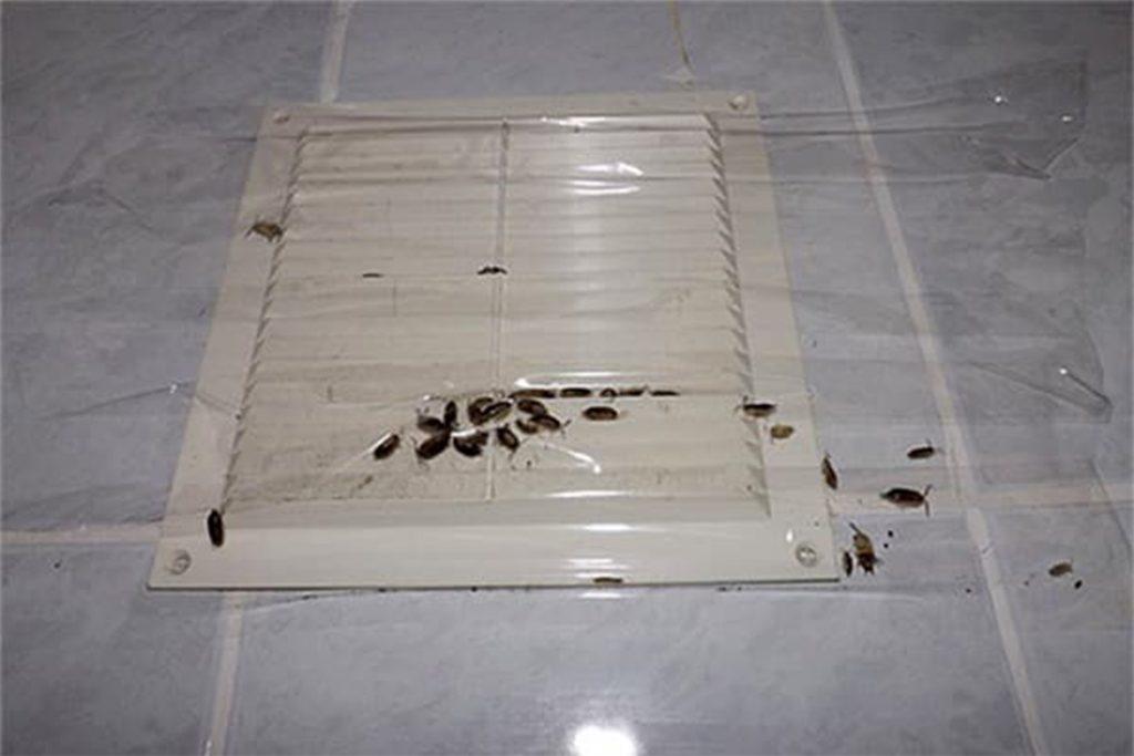 10 видов самой эффективной обработки (травли) тараканов в помещениях,правильное поведение после профессиональной травли дезинсекторами