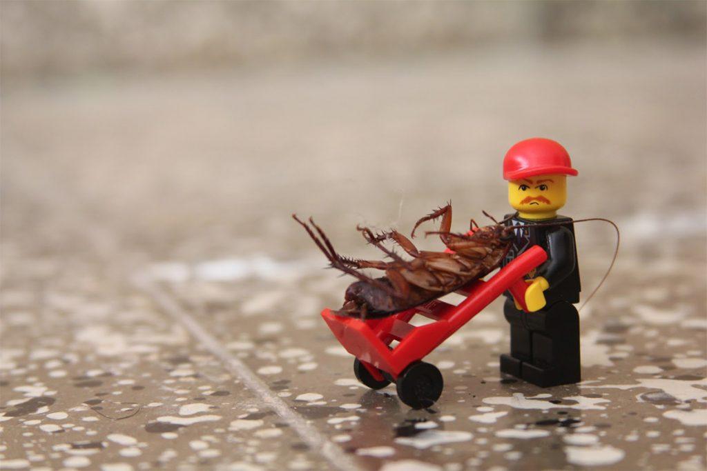 10 видов самой эффективной обработки (травли) тараканов в помещениях, вызов на травлю, кто приезжает