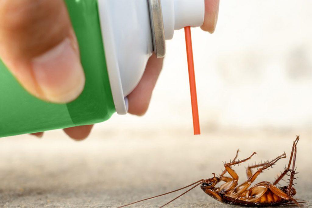 40 способов избавиться от тараканов в квартире и частном доме раз и навсегда, отзывы