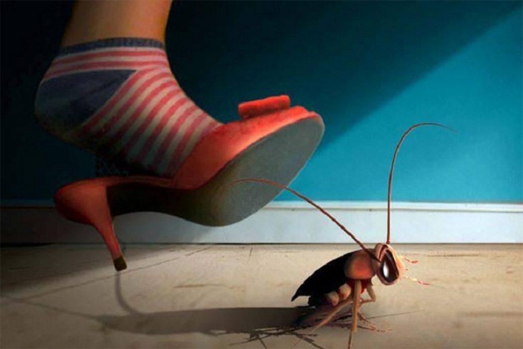 40 способов избавиться от тараканов в квартире и частном доме раз и навсегда, предупреждение появления