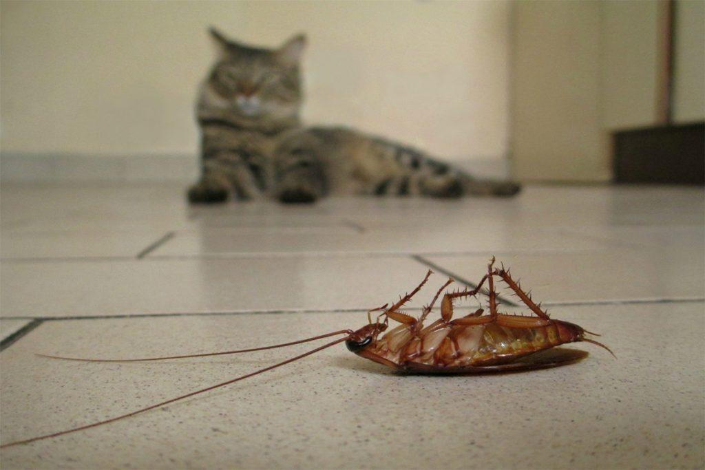 40 способов избавиться от тараканов в квартире и частном доме раз и навсегда, профилактика