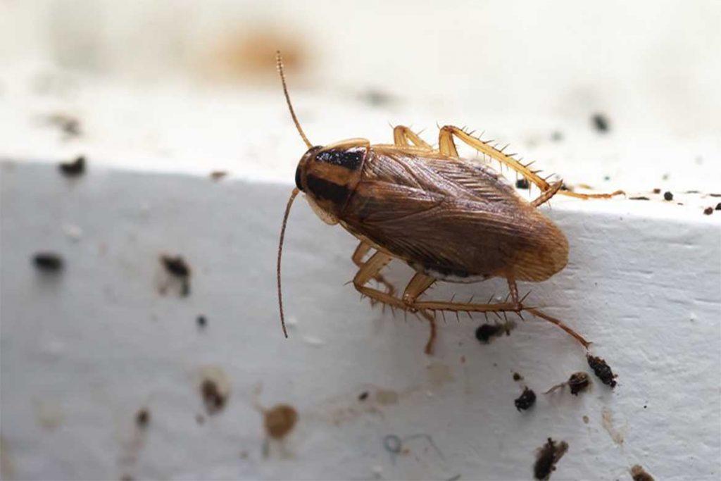 Где живут тараканы в квартире, частном доме, природе, как найти их гнездо, как узнать есть ли в квартире