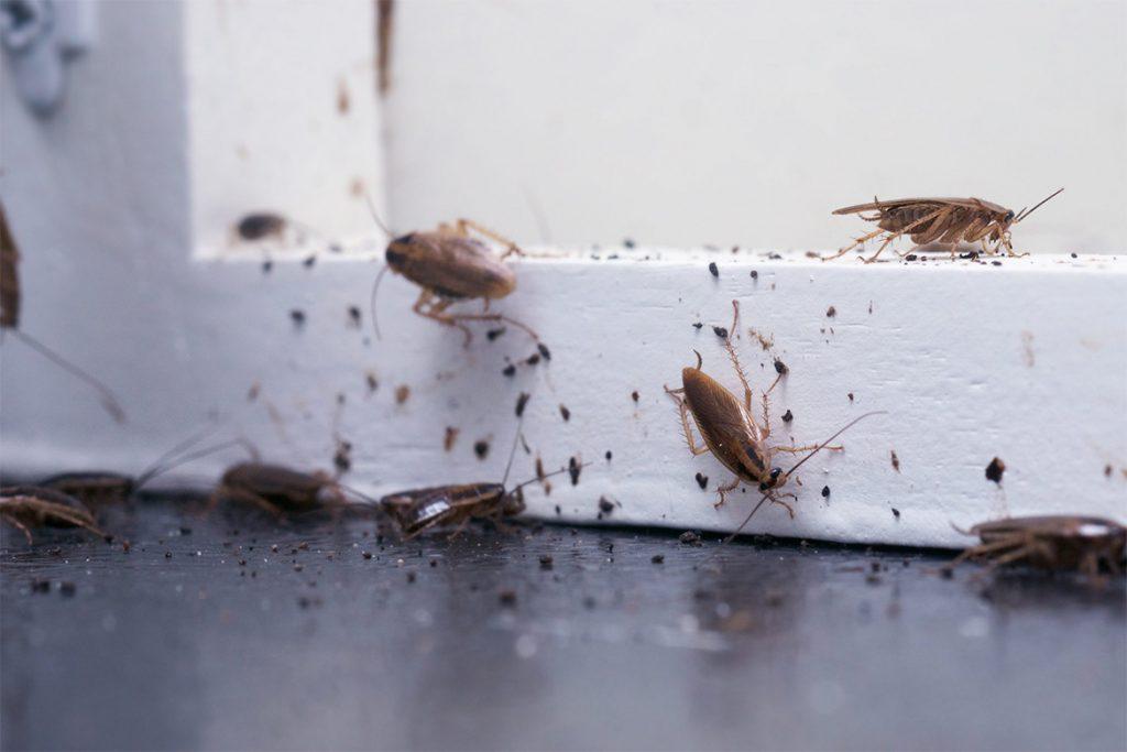 Как избавиться от чёрных и рыжих тараканов в домашних условиях народными способами, причины появления в жилом доме