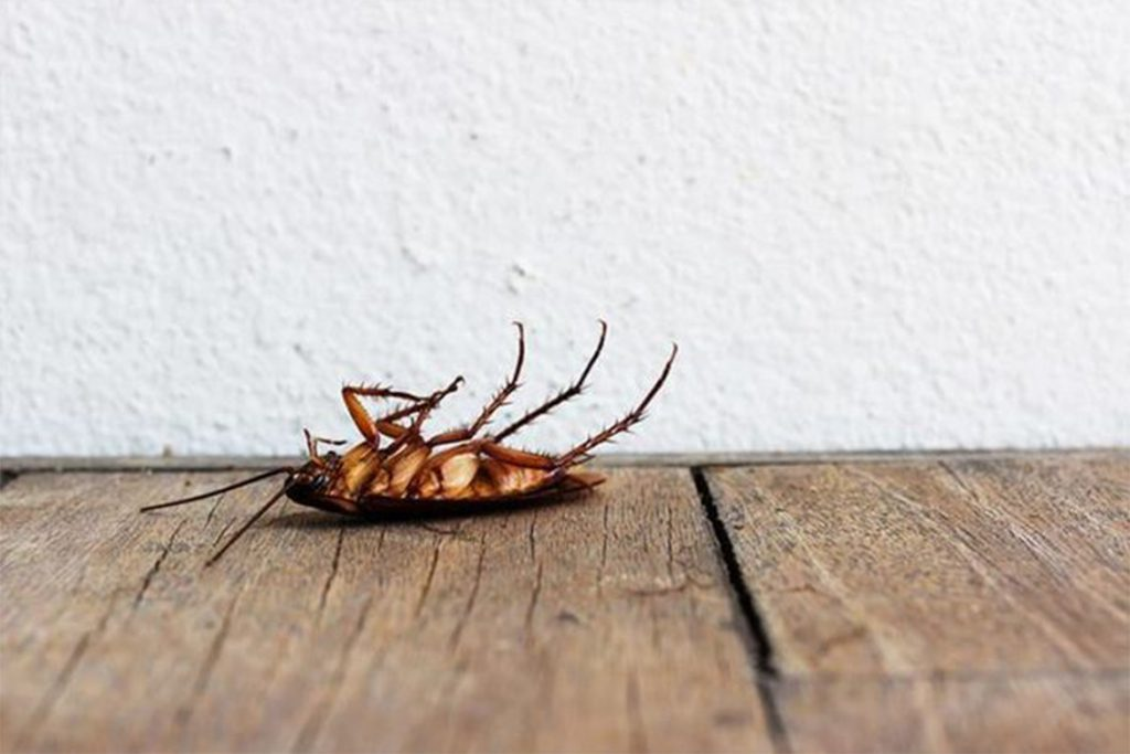 Как избавиться от чёрных и рыжих тараканов в домашних условиях народными способами быстро, эффективно и навсегда