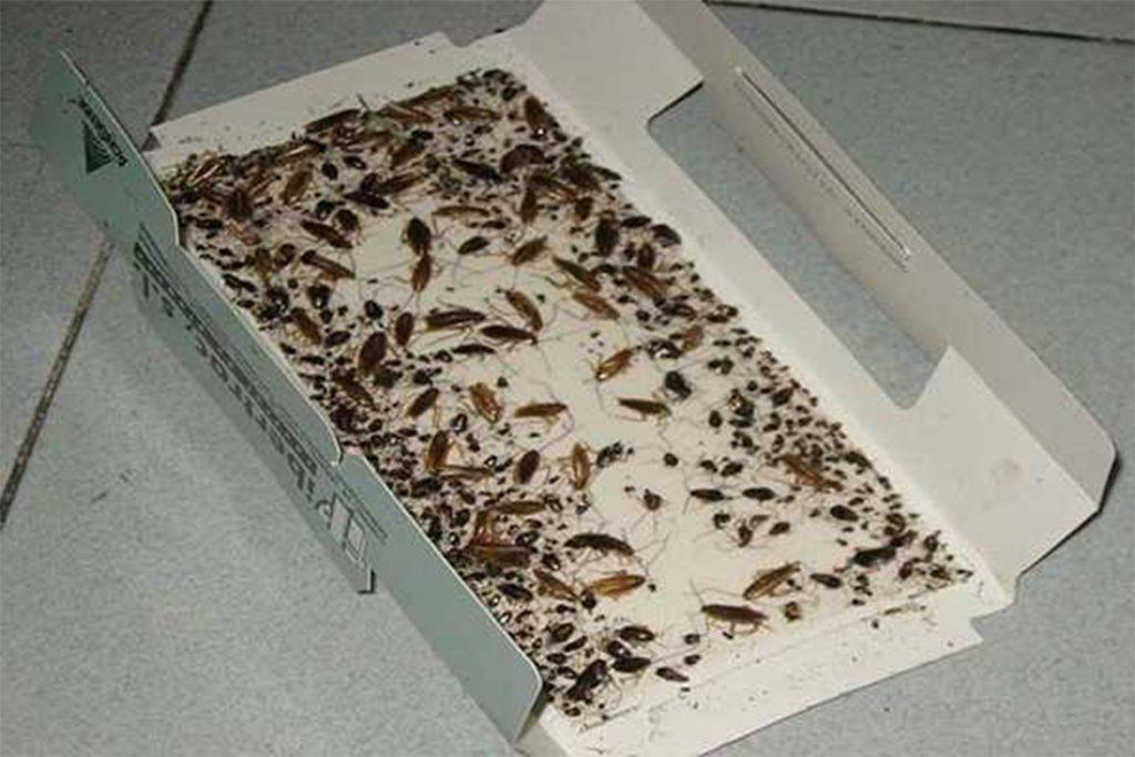 Как избавиться от чёрных и рыжих тараканов в домашних условиях народными способами, ловушки своими руками