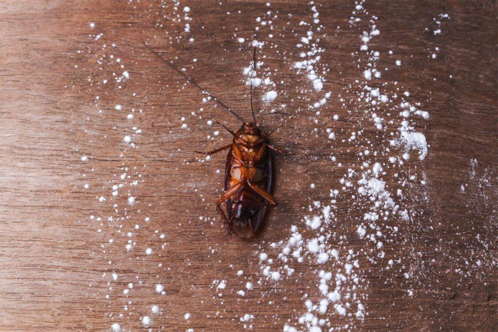 Как избавиться от чёрных и рыжих тараканов в домашних условиях народными способами, отзывы