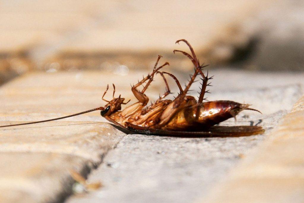 14 лучших рецептов отрав и приманок с борной кислотой от тараканов химические средства