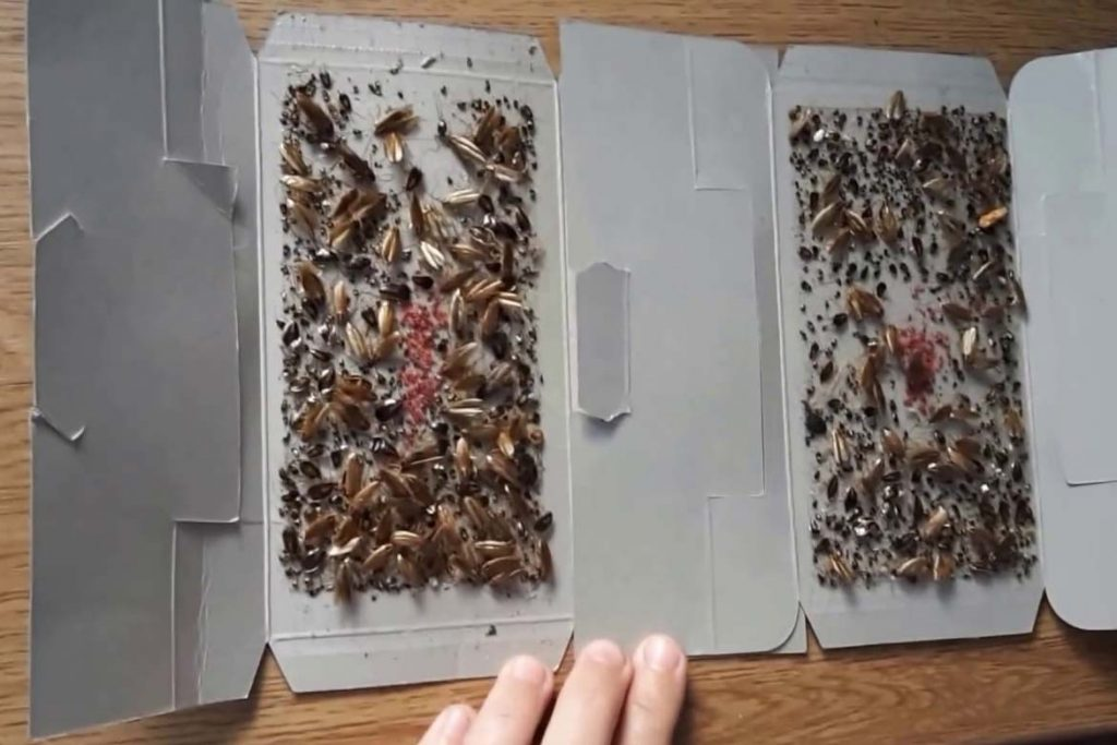 Как сделать самую эффективную ловушку для тараканов своими руками из картона