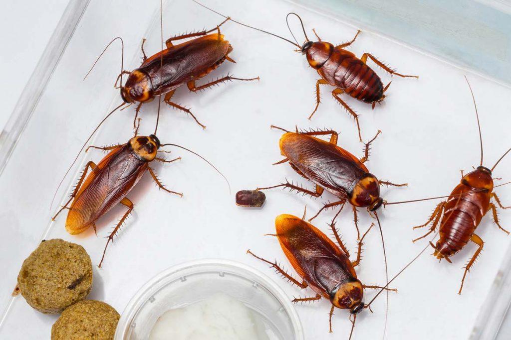 Помогает ли Дихлофос от тараканов и как им пользоваться без вреда для здоровья заключение