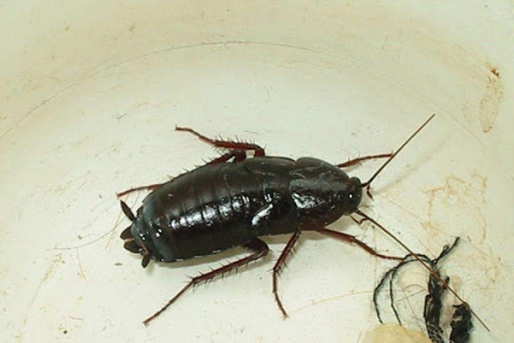 как вывести тараканов из квартиры народные средства плюсы и минусы