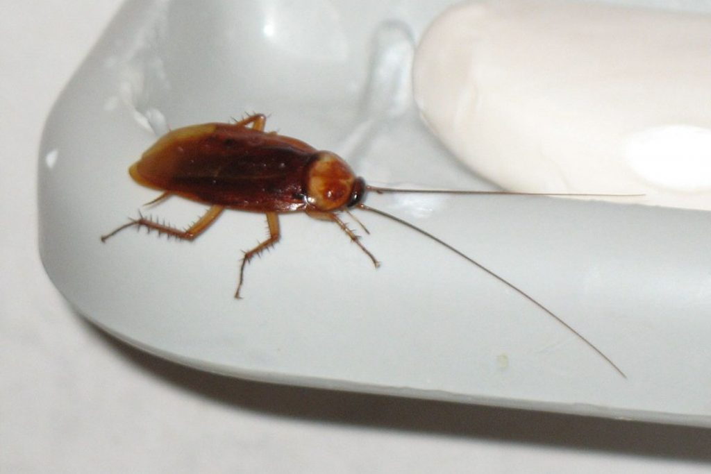 как вывести тараканов из квартиры в бане