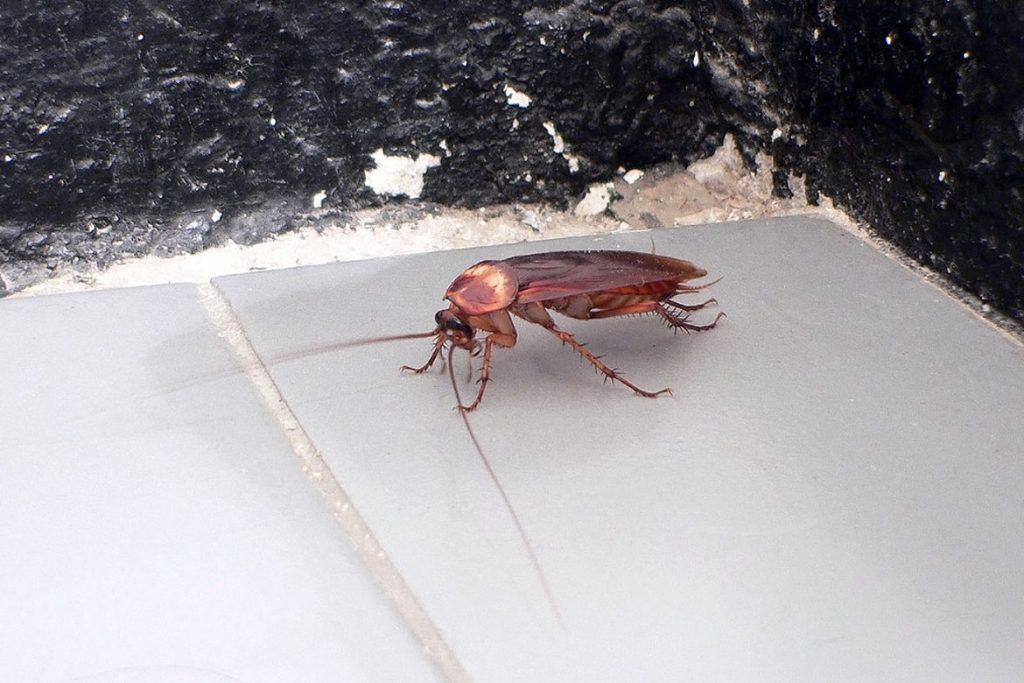 как вывести тараканов из квартиры как появляются