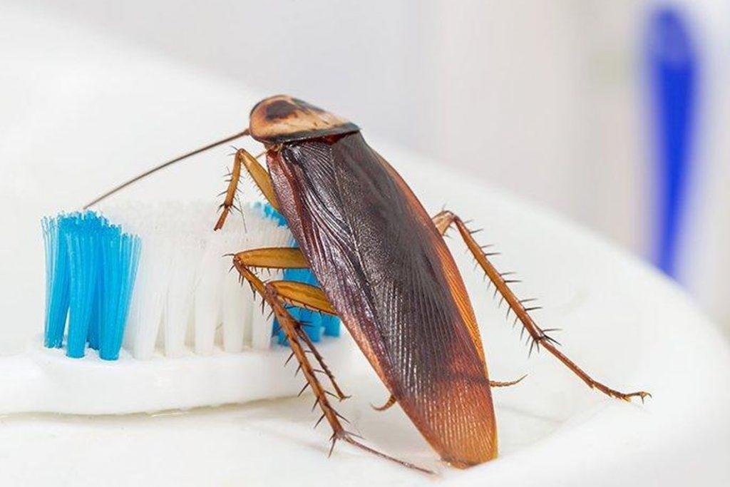 как вывести тараканов из квартиры в бане Заключение