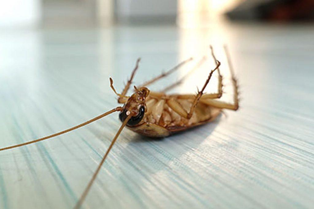 как вывести тараканов из квартиры фото