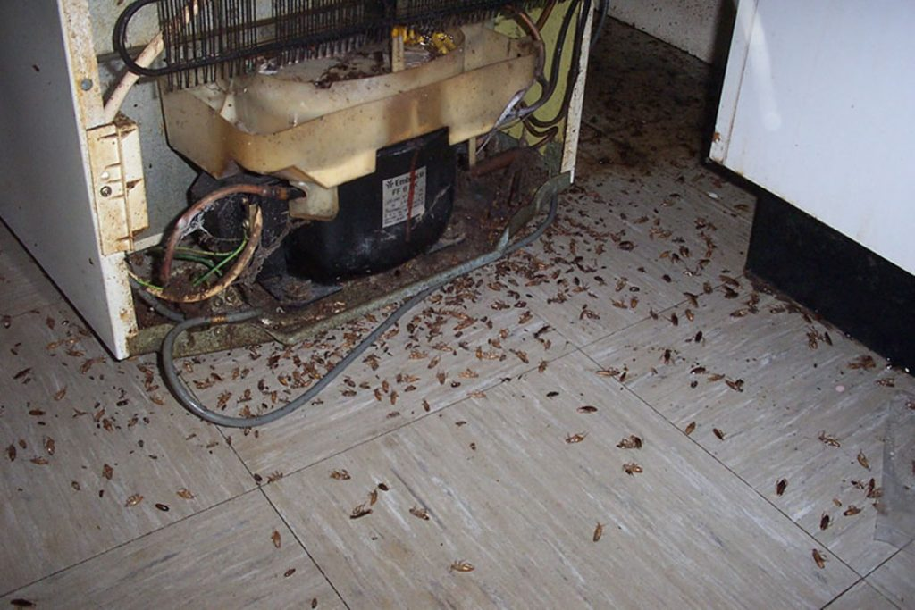 как вывести тараканов из квартиры на кухне