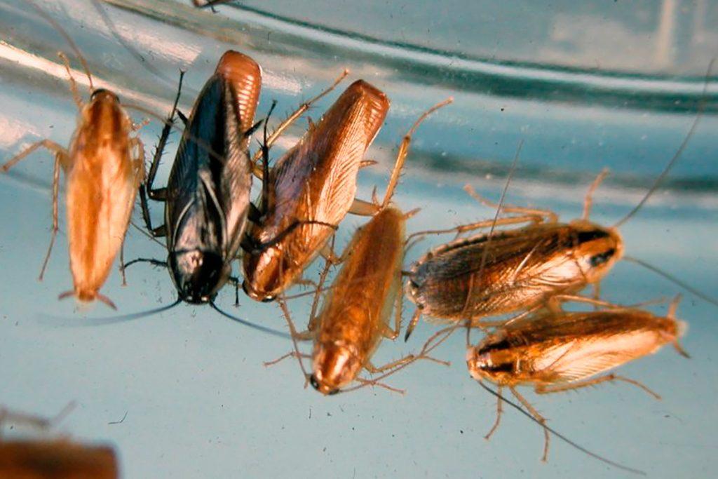 25 видов тараканов в квартире