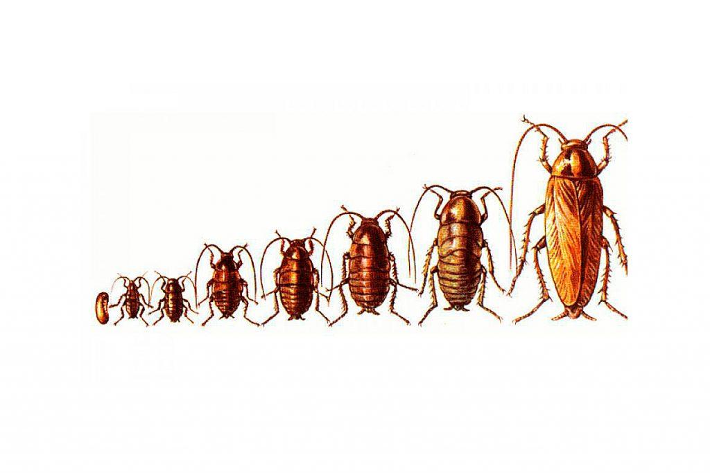 25 видов тараканов заключение