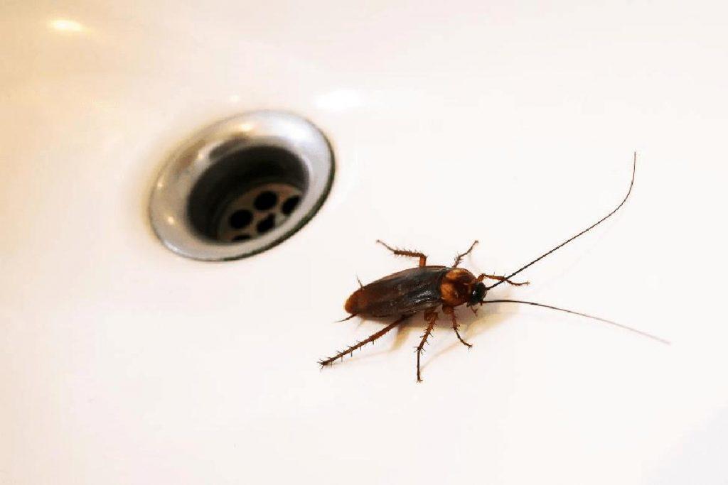 Черный таракан Откуда и почему черные тараканы берутся в квартирах